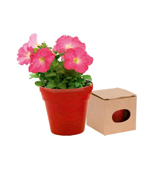 Kukka lahjasetti